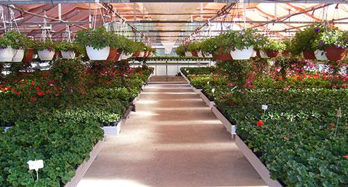 Gartencenter Schmitz home